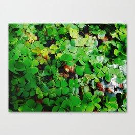 Watercress Canvas Print