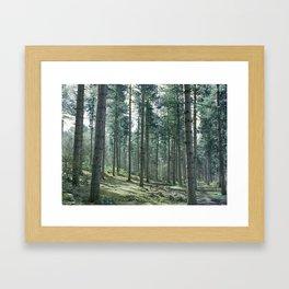 The pines forêt Framed Art Print
