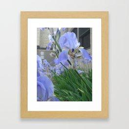 june iris 3 Framed Art Print