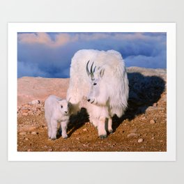 Above The Clouds. Mother and Kid - A young  Mount Evans CO USA Art Print