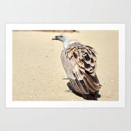 Vulture Look Art Print