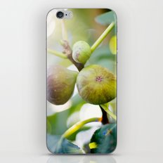 Figs iPhone & iPod Skin