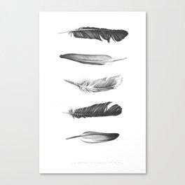 Five Feathers. Five Dreams. Canvas Print