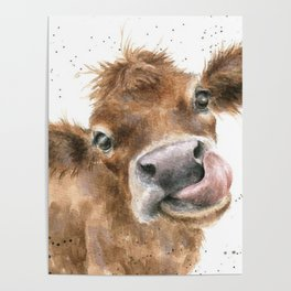 Face baby cattle Poster