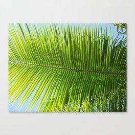 A single palm branch Canvas Print