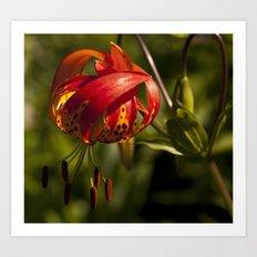 Firery Lily Art Print