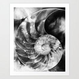 Black And White Nautilus Shell By Sharon Cummings Art Print