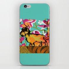 Dachshund  pop art iPhone & iPod Skin