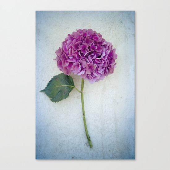 One Hydrangea II Canvas Print