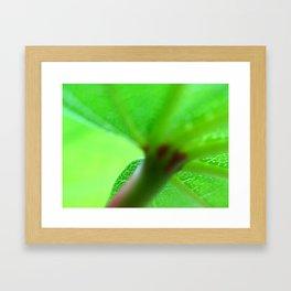 *Shelter Framed Art Print