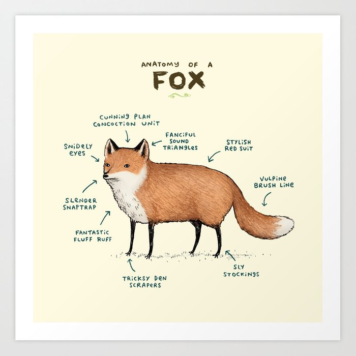 Anatomy Of A Fox Art Print By Sophiecorrigan Society6