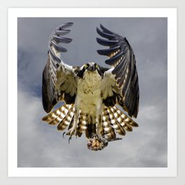 Osprey with a fish Art Print