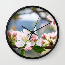 Apple blossom in spring Wall Clock