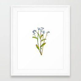 Forget-me-not flowers watercolor art Framed Art Print