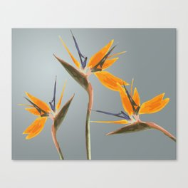 Strelizia - Bird of Paradise Flowers Canvas Print