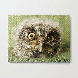 Western Screech Owl Baby Metal Print