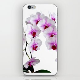 White and red Doritaenopsis orchid flowers iPhone Skin