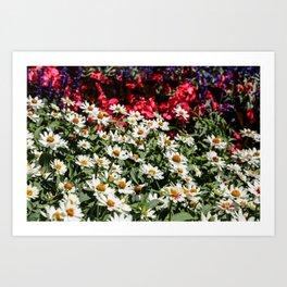 flower patch Art Print