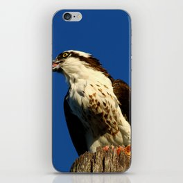Osprey With His Dinner Leftovers iPhone Skin