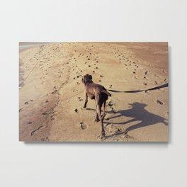 beachdog Metal Print