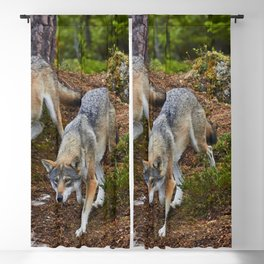 Wolves Wolf Pack Attacks On Hunt Blackout Curtain