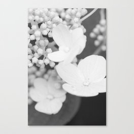 Soft Stages no. 2 Canvas Print
