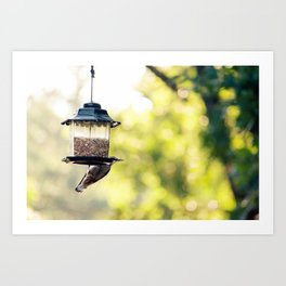 bird eating Art Print
