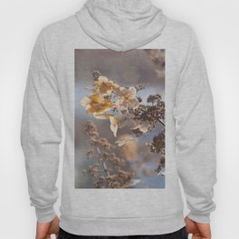 Sunlight through Dried Flowers Hoody