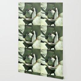 Agave Center Wallpaper