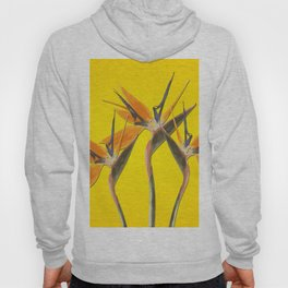 strelitzia - Bird of Paradise Flowers II Hoody