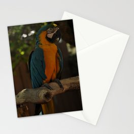 Colors1 Stationery Cards