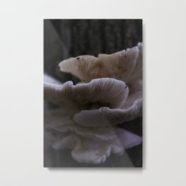 Large Wild Oyster Mushrooms Metal Print