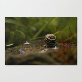 Traveling Snail Canvas Print