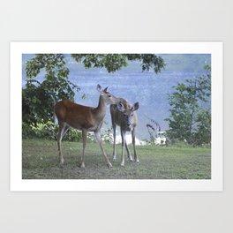 Early Evening Visitors Young Deer -Debra Cortese photo art Art Print