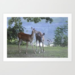 Early Evening Visitors Young Deer -Debra Cortese photo art Art Print