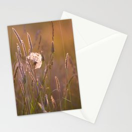 Arnica medicinal plant in a summer meadow Stationery Cards