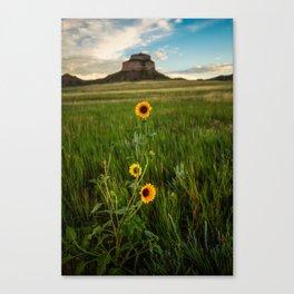 Sunflowers on the Western Prairie - Flowers and Landscape Near Scottsbluff Nebraska Canvas Print