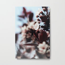 Soft Blossoms Metal Print