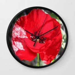 Single Red Poppy Flower  Wall Clock