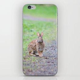 Rabbit in the Path iPhone Skin