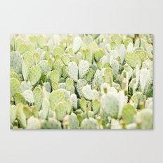 cactus gathering Canvas Print