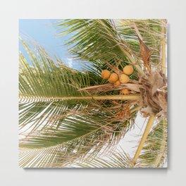 Spring palm I Palm tree I summer time I Curacao I Tropics I Summer Breeze  Metal Print