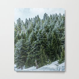 Snow Bank Woodlands // Photograph of the Dense Blue Green Evergreen Pine Tree Forest Metal Print
