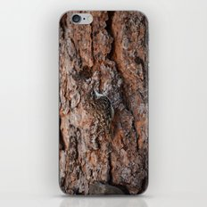 Brown Creeper Nuthatch iPhone & iPod Skin