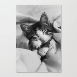 Snuggled Up Sleeping Kitten Canvas Print