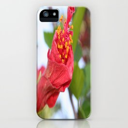 Curled Petals of A Red Hibiscus Bud iPhone Case