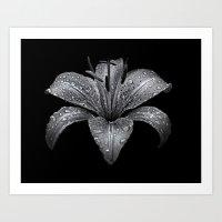 Backyard Flowers In Black And White 8 Art Print