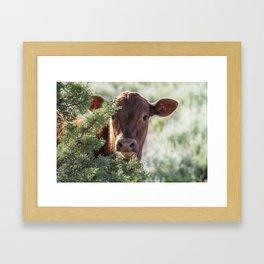 Shy Calf Framed Art Print
