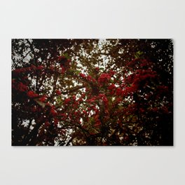 redglobe Canvas Print