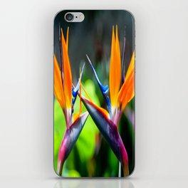 Bird Dance iPhone Skin